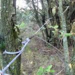 Refugi 1. Cobert entre arbres